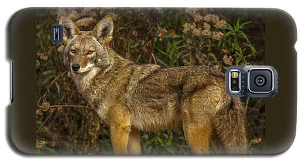 The Coyote Galaxy S5 Case