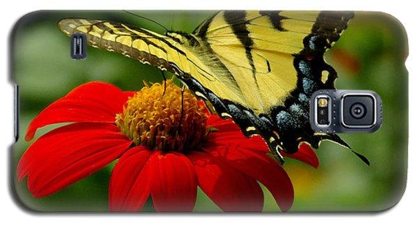 Tiger Swallowtail  Galaxy S5 Case