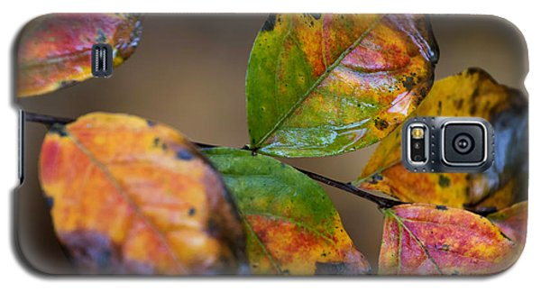 Galaxy S5 Case featuring the photograph Turning Leaves by Stephen Anderson