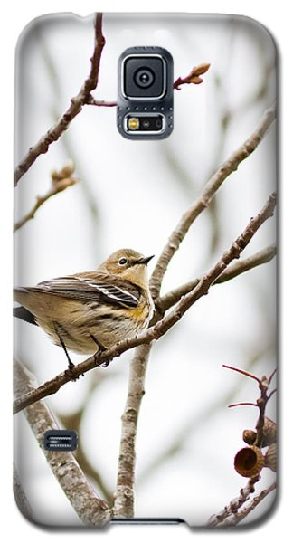 Galaxy S5 Case featuring the photograph Warbler Calls by Annette Hugen