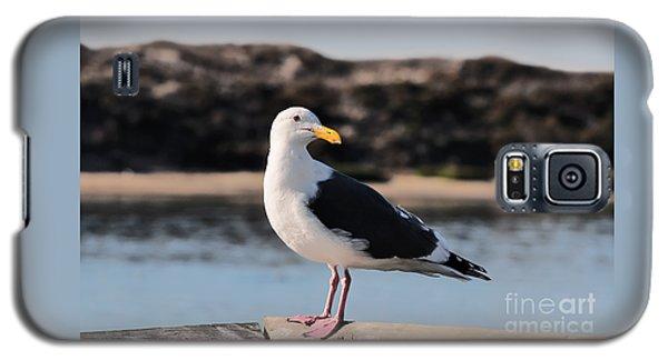 Western Gull At Moss Landing Inlet Galaxy S5 Case