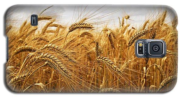 Wheat Galaxy S5 Case by Elena Elisseeva