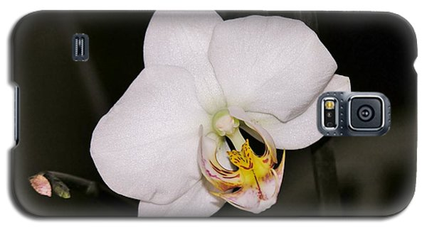 Galaxy S5 Case featuring the photograph White Orchid by Sherman Perry