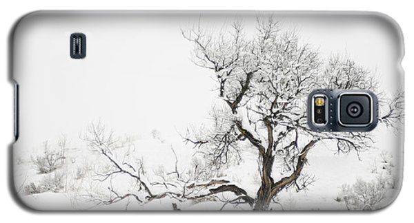 Winter Sage Galaxy S5 Case by Sandi Mikuse