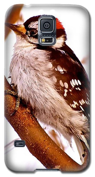 Woody Galaxy S5 Case by Jim Hogg