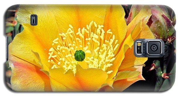 Yellow Cactus Bloom  Galaxy S5 Case