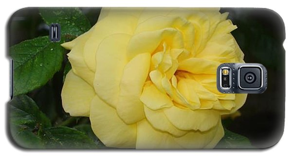 Galaxy S5 Case featuring the photograph Yellow Rose  by Katy Mei