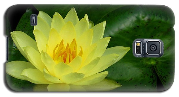 Yellow Waterlily Flower Galaxy S5 Case