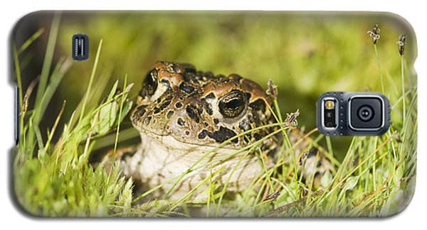 Yosemite Toad Galaxy S5 Case