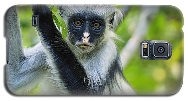 Zanzibar Red Colobus In Tree Jozani Galaxy S5 Case