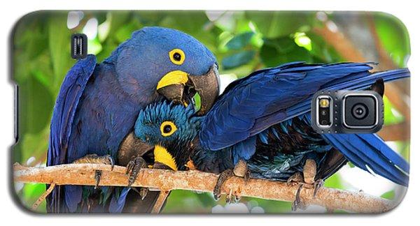 Brazil, Mato Grosso, The Pantanal Galaxy S5 Case