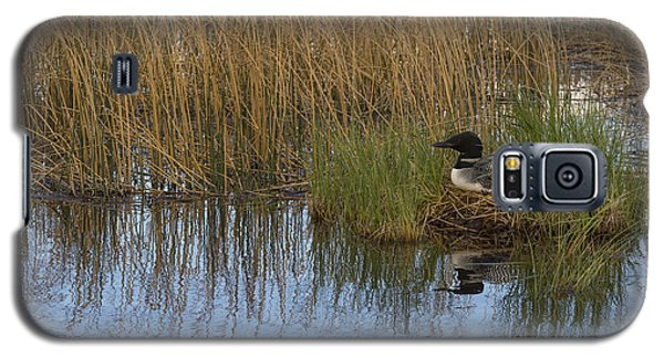 Common Loon Gavia Immer, Canada Galaxy S5 Case by John Shaw