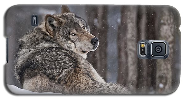 Timber Wolf Galaxy S5 Case