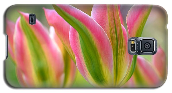 Galaxy S5 Case featuring the photograph 2.5 Tulip by JoAnn Lense