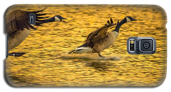 Galaxy S5 Case featuring the photograph Canada Geese by Brian Stevens