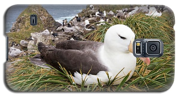 A Black Browed Albatross Galaxy S5 Case
