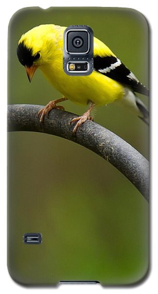 American Goldfinch Galaxy S5 Case by Robert L Jackson