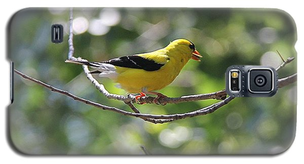 Galaxy S5 Case featuring the photograph American Goldfinch by Yumi Johnson