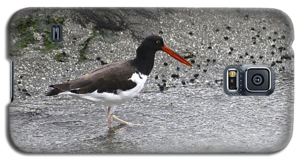 Galaxy S5 Case featuring the photograph American Oyster Catcher  by Jeanne Kay Juhos