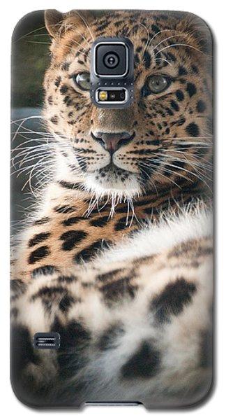 Amur Leopard Galaxy S5 Case