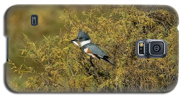 Belted Kingfisher With Fish Galaxy S5 Case by Anthony Mercieca