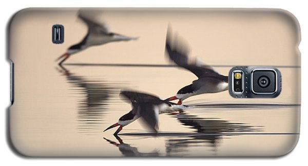 Galaxy S5 Case featuring the photograph 3 Black Skimmers  382z3059 by David Orias