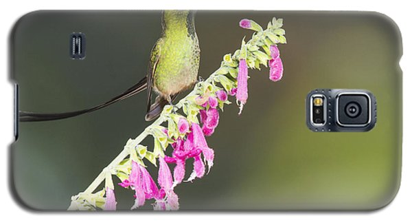 Galaxy S5 Case featuring the photograph Black-tailed Train Bearer Hummingbird by Dan Suzio