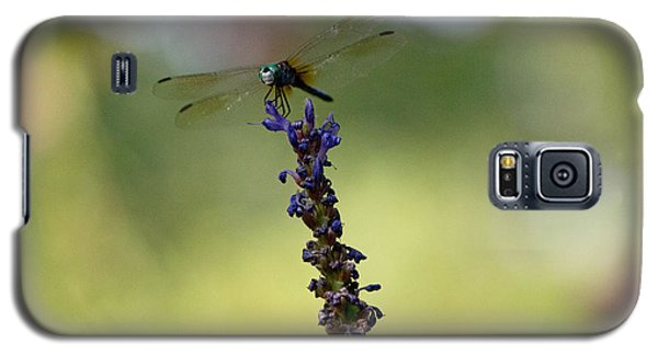 Blue Dragonfly Galaxy S5 Case