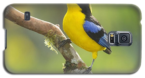 Blue-winged Mountain Tanager Galaxy S5 Case