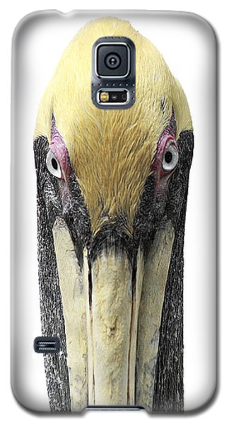 Brown Pelican-2 Galaxy S5 Case