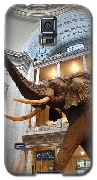 Bull Elephant In Natural History Rotunda Galaxy S5 Case