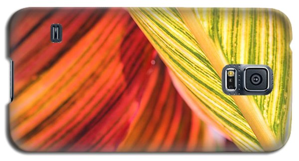 Canna Lily Named Durban Galaxy S5 Case
