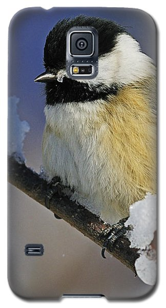 Winter Chickadee... Galaxy S5 Case by Nina Stavlund