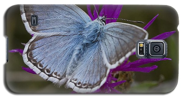 Galaxy S5 Case featuring the photograph Common Blue Butterfly by Shirley Mitchell