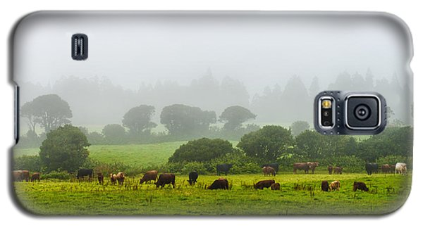 Cows At Rest Galaxy S5 Case