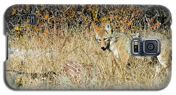 Coyotes Galaxy S5 Case