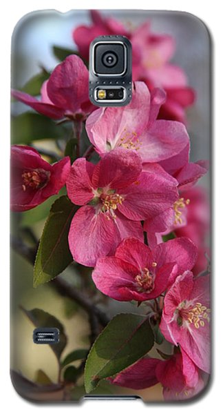 Galaxy S5 Case featuring the photograph Crabapple Blossoms by Vadim Levin