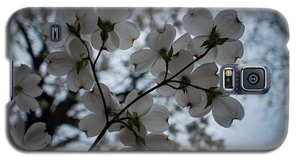 Galaxy S5 Case featuring the photograph Dogwoods by Wayne Meyer