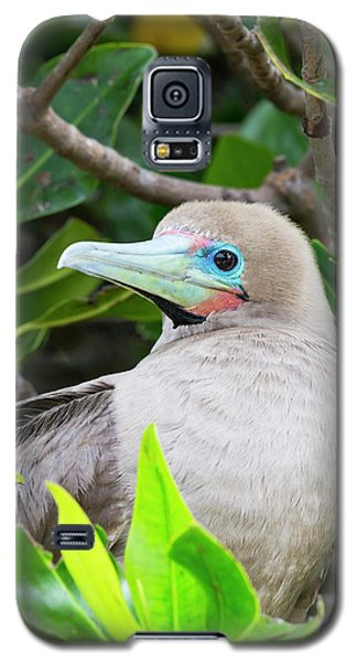 Ecuador, Galapagos Islands, Genovesa Galaxy S5 Case