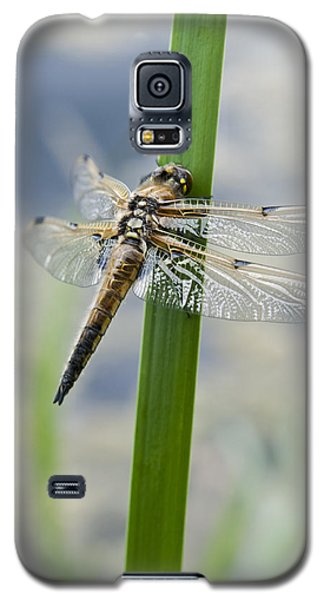Galaxy S5 Case featuring the photograph Four-spotted Chaser Dragonfly by David Isaacson