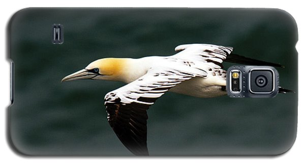 Galaxy S5 Case featuring the photograph Gannet  by Paul Scoullar