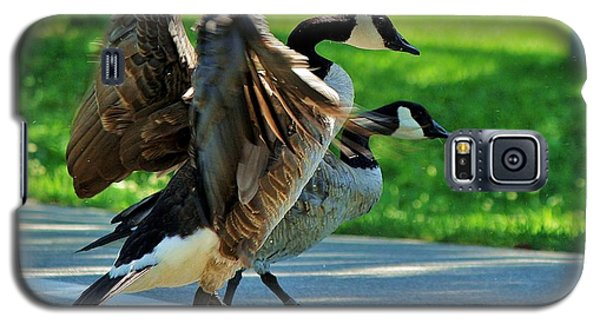 Geese Crossing Galaxy S5 Case