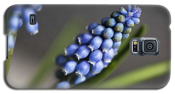 Grape Hyacinth Galaxy S5 Case by Nailia Schwarz