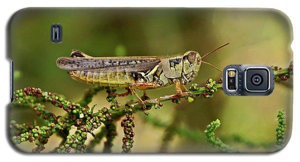 Galaxy S5 Case featuring the photograph Grasshopper by Olga Hamilton
