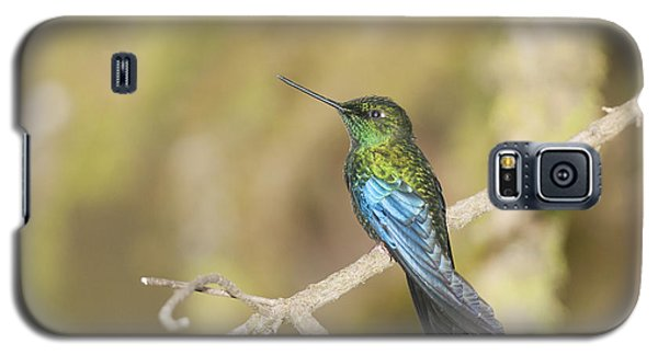 Great Sapphirewing Hummingbird Galaxy S5 Case