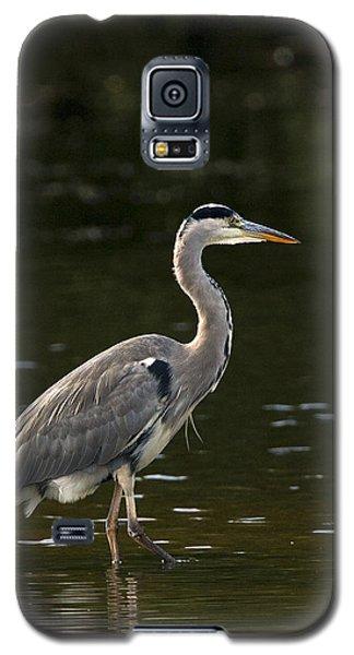 Grey Heron  Galaxy S5 Case