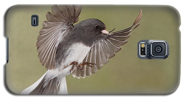 Galaxy S5 Case featuring the photograph Jimmy Junco by Gerry Sibell