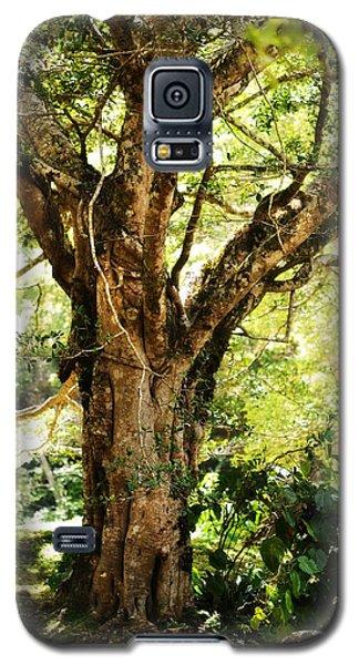 Kingdom Of The Trees. Peradeniya Botanical Garden. Sri Lanka Galaxy S5 Case