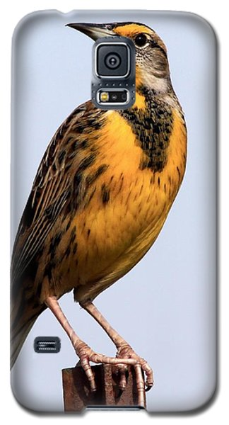 Meadowlark Galaxy S5 Case