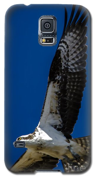 Galaxy S5 Case featuring the photograph Osprey In Flight by Dale Powell